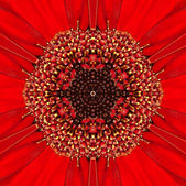 Red Concentric Flower Center. Mandala Kaleidoscopic design — Stock Photo