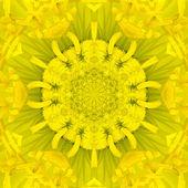 Yellow Concentric Flower Center. Mandala Kaleidoscopic design — Stock Photo