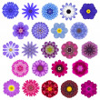 Постер, плакат: Big Selection of Various Concentric Mandala Flowers Isolated on White
