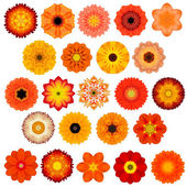 Large Selection of Various Concentric Mandala Flowers Isolated on White — Stock Photo