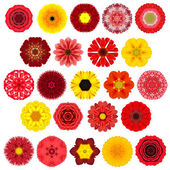 Huge Selection of Various Concentric Mandala Flowers Isolated on White — Stock Photo
