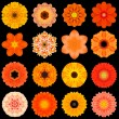 Stock Photo: Big Collection of Various Orange Pattern Flowers Isolated on Black