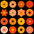 Big Collection of Various Orange Pattern Flowers Isolated on Black — Stock Photo #39436411