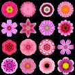 Stock Photo: Big Collection of Various Purple Pattern Flowers Isolated on Black