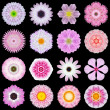 Big Collection of Various Pink Pattern Flowers Isolated on Black — Stock Photo