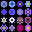 Stock Photo: Big Collection of Various Blue Pattern Flowers Isolated on Black