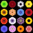 Big Collection of Various Colorful Pattern Flowers Isolated on Black — Stock Photo