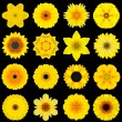 Big Collection of Various Yellow Pattern Flowers Isolated on Black — Stock Photo