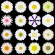 Big Collection of Various White Pattern Flowers Isolated on Black — Stock Photo