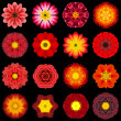 Big Collection of Various Red Pattern Flowers Isolated on Black — Stock Photo #39436561