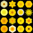 Big Collection of Various Yellow Pattern Flowers Isolated on Black — Stock Photo #39436571