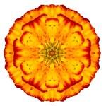 Orange Concentric Marigold Mandala Flower Isolated on White — Stock Photo #40845405