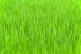 草の露の滴と背景 — ストック写真