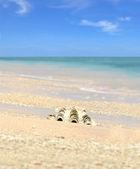 海贝壳沙滩与蓝蓝的天空上 — 图库照片