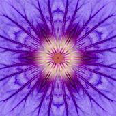 Purple Concentric Flower Center Mandala Kaleidoscopic design — Stock Photo
