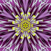 Purple Concentric Flower Center Mandala Kaleidoscopic design — Stock Photo