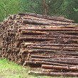 A lot of sawn timber — Stock Photo