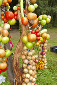Vegetable tree — Stock Photo