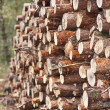 Stock Photo: Stack of logs