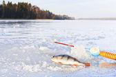 Winter fishing on ice — Stock Photo
