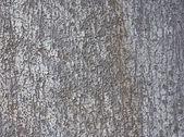 The texture of tree bark — Stock Photo