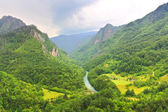 Mountain river Tara in Montenegro — Stock Photo