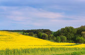 Blossoming field and skyscape — Stock Photo
