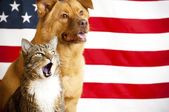 Cat and dog with US flag — Stock Photo