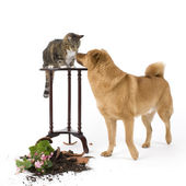 Cat and Dog troublemakers — Stock Photo