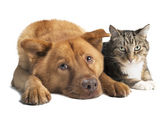 Dog and Cat together wide angle — Stock Photo