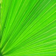 Closeup of green palm leaf — Stock Photo #14135762