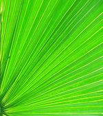 Closeup of green palm leaf — Stock Photo