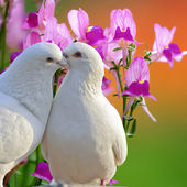 Two loving white doves and butterfly orchid flower — Stock Photo