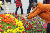 A man is shooting photos of tulips on a busy pedestrian shopping street — Foto de Stock