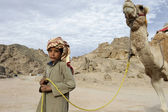 Bedouin boy pulling a camel — Stock Photo