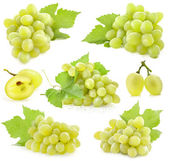 Collection of Grapes with leaves — Stock Photo