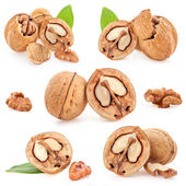 Collection of Walnut and a cracked walnut — Stock Photo