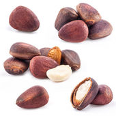 Pine nuts, closeup — Stock Photo