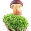 Boletus mushrooms on moss - Stock Photo