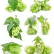 Постер, плакат: Collection of Hops