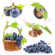 Collection of Dark grapes - Stock Photo