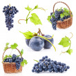 Collections of Dark grapes — Stock Photo #14074699