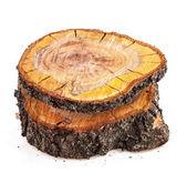 Rough cut of fruit tree — Stock Photo