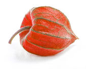 Red physalis — Stock Photo