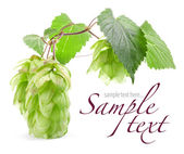 Hops with leaf — Stock Photo