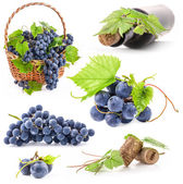 Collection of Dark grapes — Photo