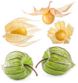 Collection of Fresh physalis — Stock Photo