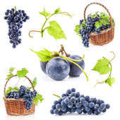 Collections of Dark grapes — Stock Photo
