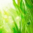 Green grass in the morning sun with water drops — Stock Photo #14967453