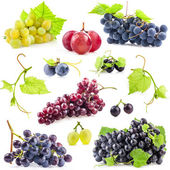 Collection of grapes — Stock Photo